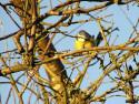 Tapeta Kolekce ptáků 5