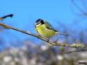 Tapeta Kolekce ptáků 6