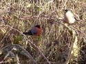 Tapeta Kolekce ptáků 7