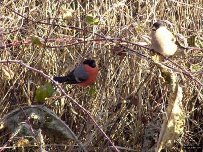 Tapeta: Kolekce ptáků 7