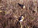 Tapeta Kolekce ptáků 8