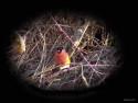 Tapeta Kolekce ptáků 9