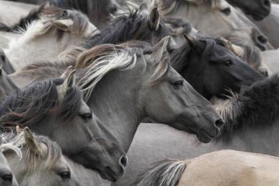 Tapeta: Koně35