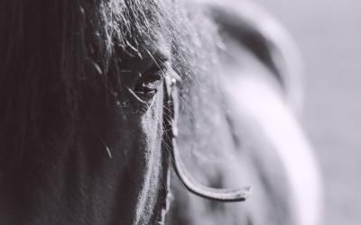 Tapeta: Koně54