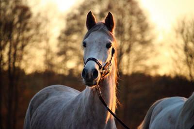 Tapeta: Koně68