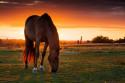 Tapeta Koně 1