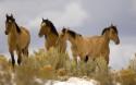 Tapeta Koně 14