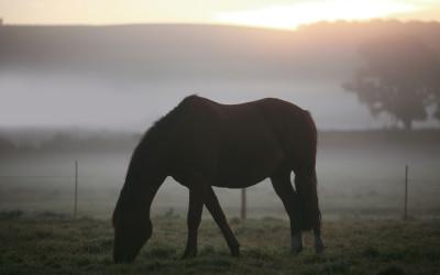 Tapeta: Koně 15