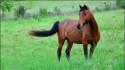 Tapeta Koně 16