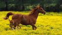 Tapeta Koně 17