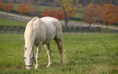Tapeta: Koně 22