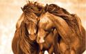 Tapeta Koně 31