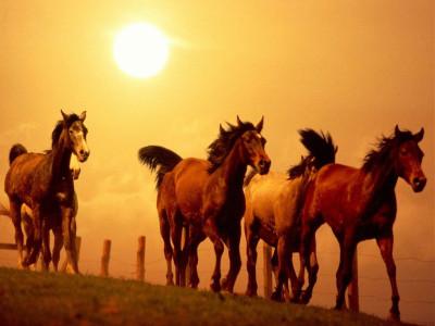 Tapeta: Koně 4