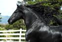 Tapeta Koně 7