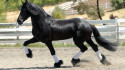 Tapeta Koně 9