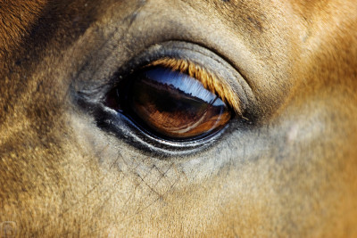 Tapeta: Koňské oko