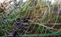 Tapeta korálková