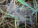 Tapeta Korálová pavučinka