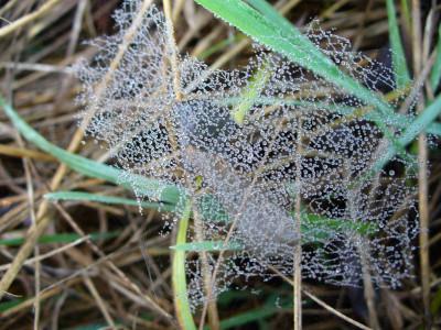 Tapeta: Korálová pavučinka