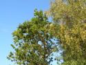 Tapeta Koruny stromů-Seč 2