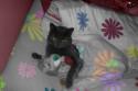 Tapeta Koťátko, koťátko