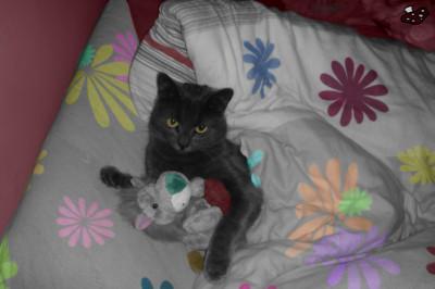Tapeta: Koťátko, koťátko