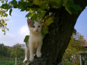 Tapeta Kotě na zahradě