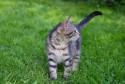 Tapeta kotě v trávě