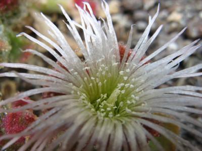 Tapeta: Kouzelná květina