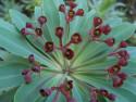 Tapeta Kouzelná květina 2