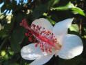 Tapeta Kouzelná květina 3