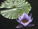 Tapeta Kouzelná květina 4