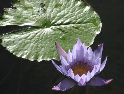 Tapeta: Kouzelná květina 4
