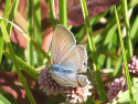 Tapeta Kouzelná květina 5