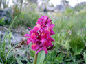 Tapeta Kouzelné orchideje 10