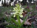 Tapeta Kouzelné orchideje 12