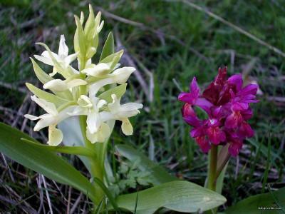 Tapeta: Kouzelné orchideje 13