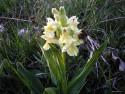 Tapeta Kouzelné orchideje 14