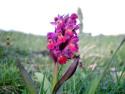 Tapeta Kouzelné orchideje 15