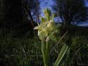 Tapeta Kouzelné orchideje 16
