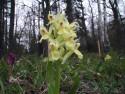 Tapeta Kouzelné orchideje 19