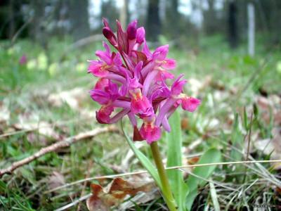 Tapeta: Kouzelné orchideje 2
