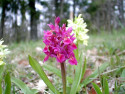 Tapeta Kouzelné orchideje 20