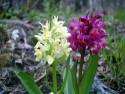 Tapeta Kouzelné orchideje 21