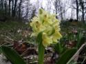Tapeta Kouzelné orchideje 22