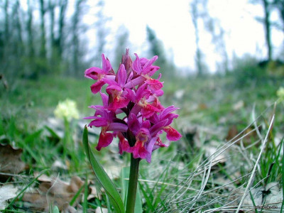Tapeta: Kouzelné orchideje 23
