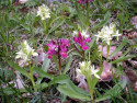 Tapeta Kouzelné orchideje 3