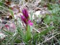Tapeta Kouzelné orchideje 5