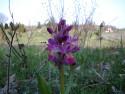Tapeta Kouzelné orchideje 7