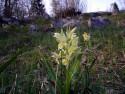 Tapeta Kouzelné orchideje 9